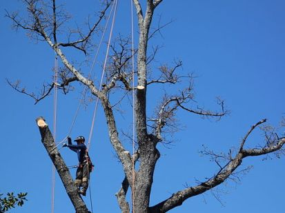 Tree Service Greenville