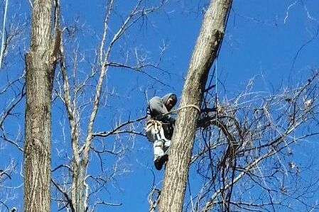 Someone doing tree trimming